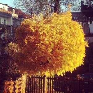 Lieber an etwas Schönes denken: Herbst, klare Luft, Laubgeruch.